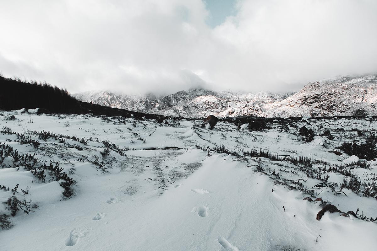 Neve na Serra da Estrela - Trilho dos Poios Brancos